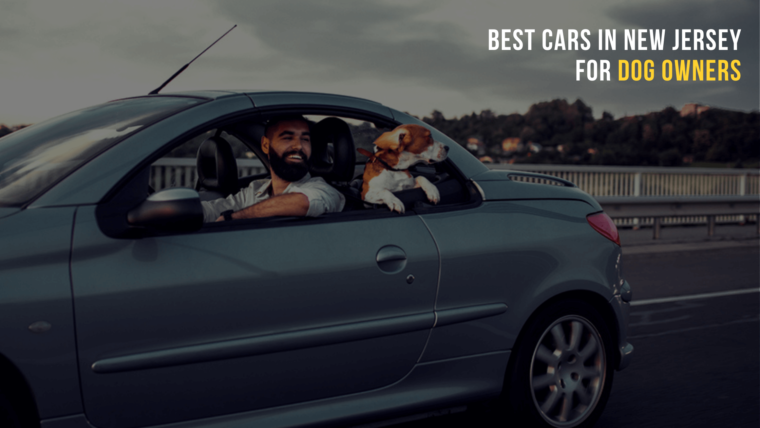 Cars in New Jersey for Dog Owners